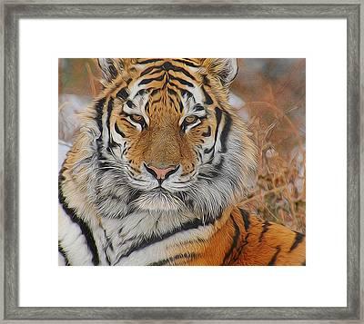 Amur Tiger Magnificence Framed Print