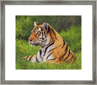 Amur Tiger Painting Framed Print