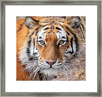 Amur Tiger Portrait Framed Print by Diane Alexander