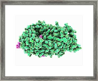 Amylase Enzyme Framed Print by Laguna Design