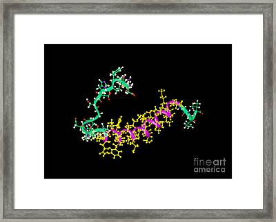 Amyloid Beta Peptide Framed Print by Leonard Lessin