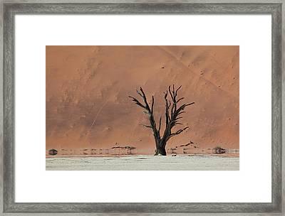 An Acacia Tree And Sand Dune Framed Print