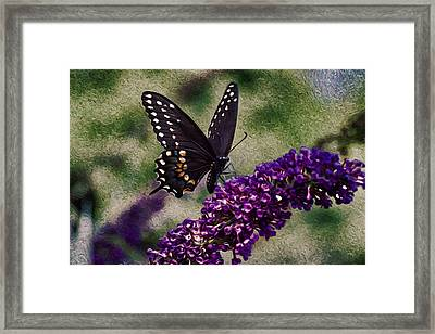 An Afternoon Visitor Framed Print