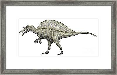 An Albino Spinosaurus Framed Print by Vitor Silva