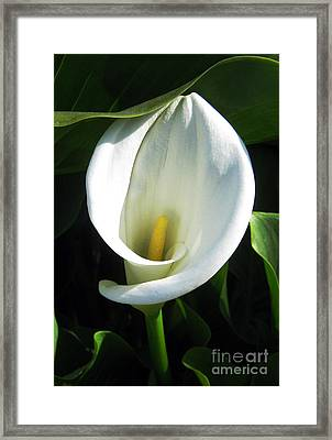 Framed Print featuring the photograph My Angels Lily  by Janice Westerberg