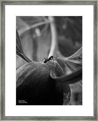 An Ant's Life Framed Print by Barbara St Jean