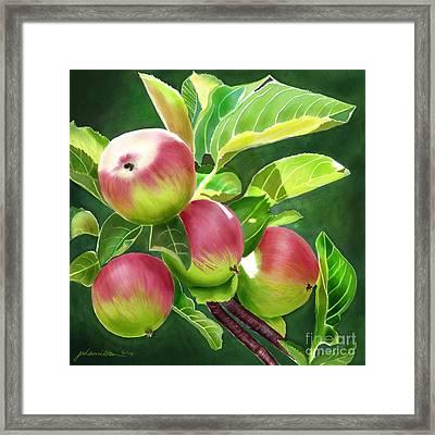 An Apple A Day Framed Print by Joan A Hamilton