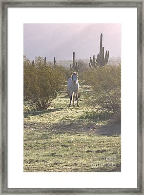 Framed Print featuring the photograph An Arizona Morning by Ruth Jolly