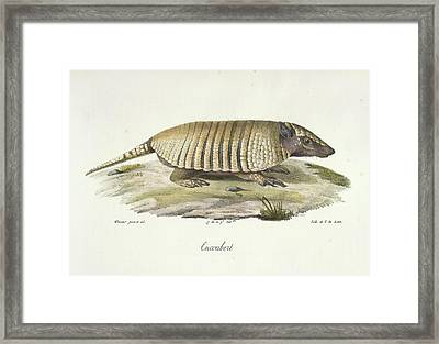 An Armadillo Framed Print by British Library
