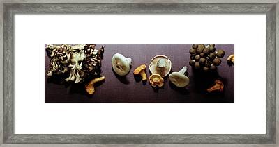 An Assortment Of Mushrooms Framed Print