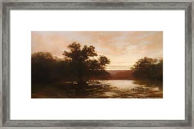 An Australian Mangrove Framed Print