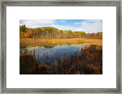 An Autumn Afternoon In The Adirondacks Framed Print by David Patterson