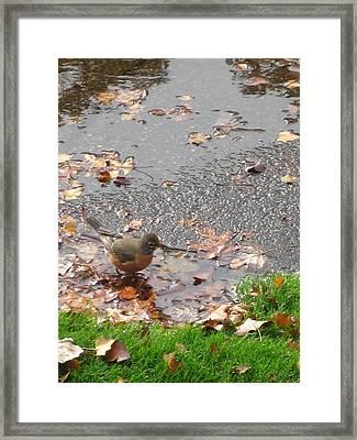 An Autumn Bath Framed Print by Guy Ricketts