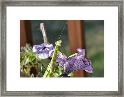 Framed Print featuring the photograph An Autumn Surprise by Verana Stark