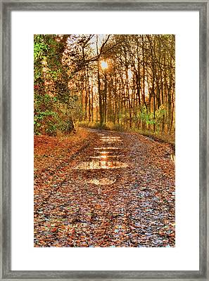 An Autumn Track Framed Print by Dave Woodbridge