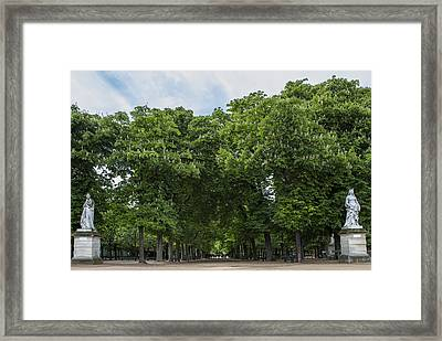 An Avenue Of Green Trees In Paris Framed Print