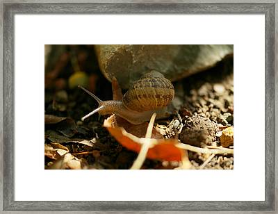 An Awesomely Slow Snail Framed Print