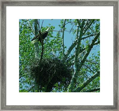 An Eagle Calls Out Framed Print