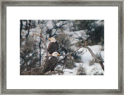 An Eagle Pair  Framed Print by Jeff Swan