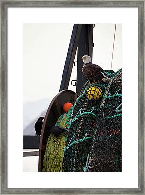 An Eagle Sits On The Fishing Nets On A Framed Print by Marion Owen / Design Pics