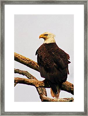 Framed Print featuring the photograph An Eagle's Perch by Polly Peacock