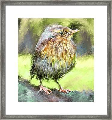 An Early Autumn Bird Framed Print