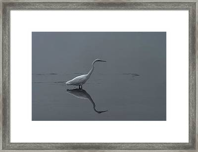 An Egret Standing In Its Reflection Framed Print by Jeff Swan