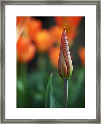 An Elegant Beginning Framed Print by Rona Black