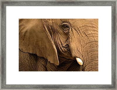 Framed Print featuring the photograph An Elephant's Eye by Nadalyn Larsen