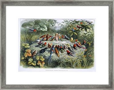 An Elf And Birds Framed Print
