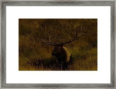 An Elk In The Mud Framed Print by Jeff Swan