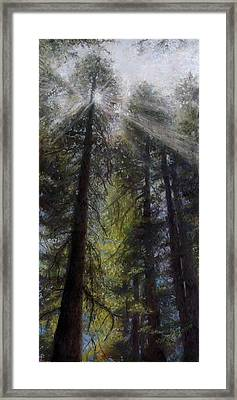 An Enchanted Forest Framed Print