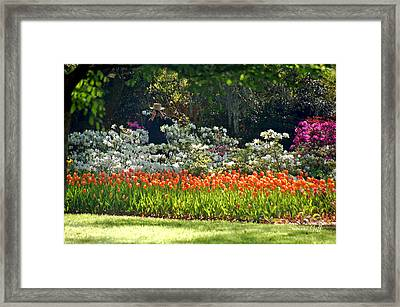 An Excellent Day To Capture The Shot Framed Print by Suzanne Gaff