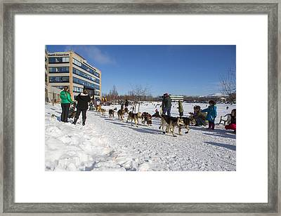 An Iditarod Racer In Anchorage Framed Print by Tim Grams