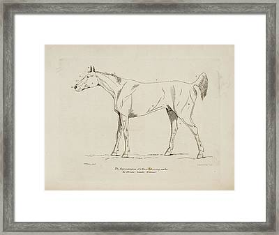 An Illustration Of A Horse Framed Print by British Library