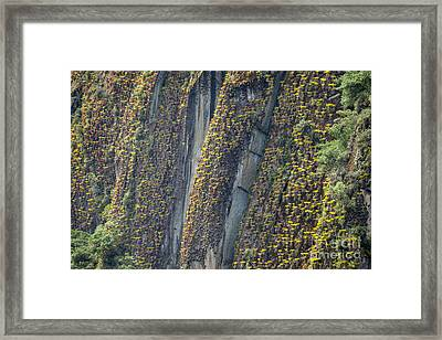 An Incline Of Bromeliads Framed Print by Jason Bazzano