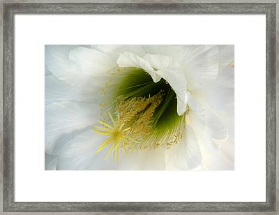 Framed Print featuring the photograph An Inside View by Cindy McDaniel
