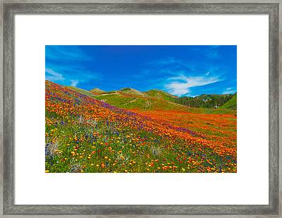 An Ocean Of Orange  Framed Print by Lynn Bauer