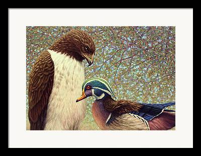 Red Falcon Framed Prints