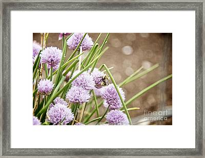 Lilac Dream Framed Print
