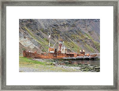 An Old Whaling Ship Framed Print by Ashley Cooper