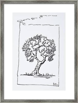 An Olive Tree In The South Of France Framed Print