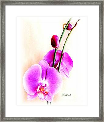 An Orchid For You Framed Print by Doris Wood