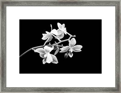 An Orchid  Framed Print by Tommytechno Sweden