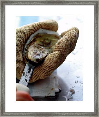 An Oytser Being Shucked Framed Print by Romulo Yanes