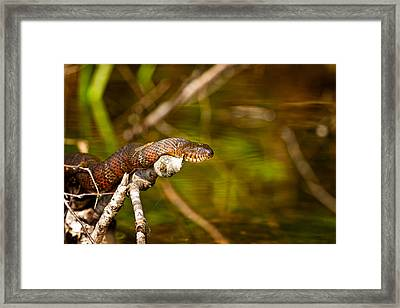 An Unlikely Pair Framed Print by Jeff Sinon