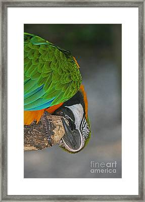 Framed Print featuring the photograph An Unusual Parrot View by Joan McArthur