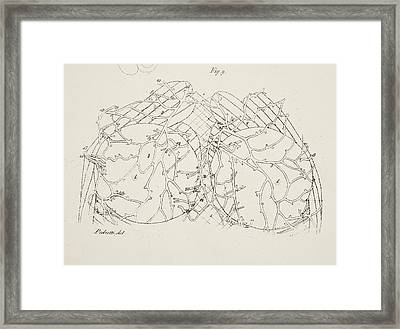 Anatomical Drawing. Testicles Framed Print by British Library