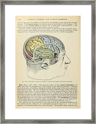 Anatomy Human Body Old Anatomical 126 Framed Print