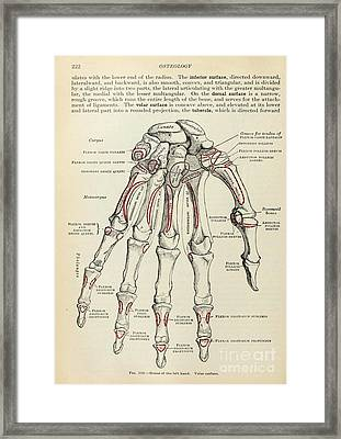 Anatomy Human Body Old Anatomical 77 Framed Print